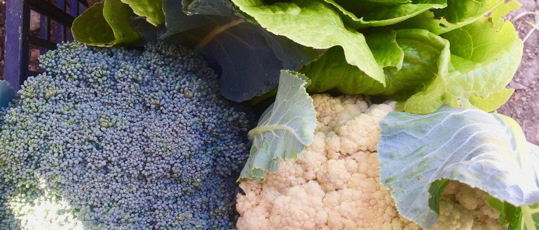 verdure nell'orto di Giampiero in Marmilla